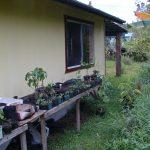Jungle Cottage's Garden Trellis