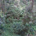 hawaii jungle crater