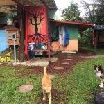 Tres Amigos Gatos!